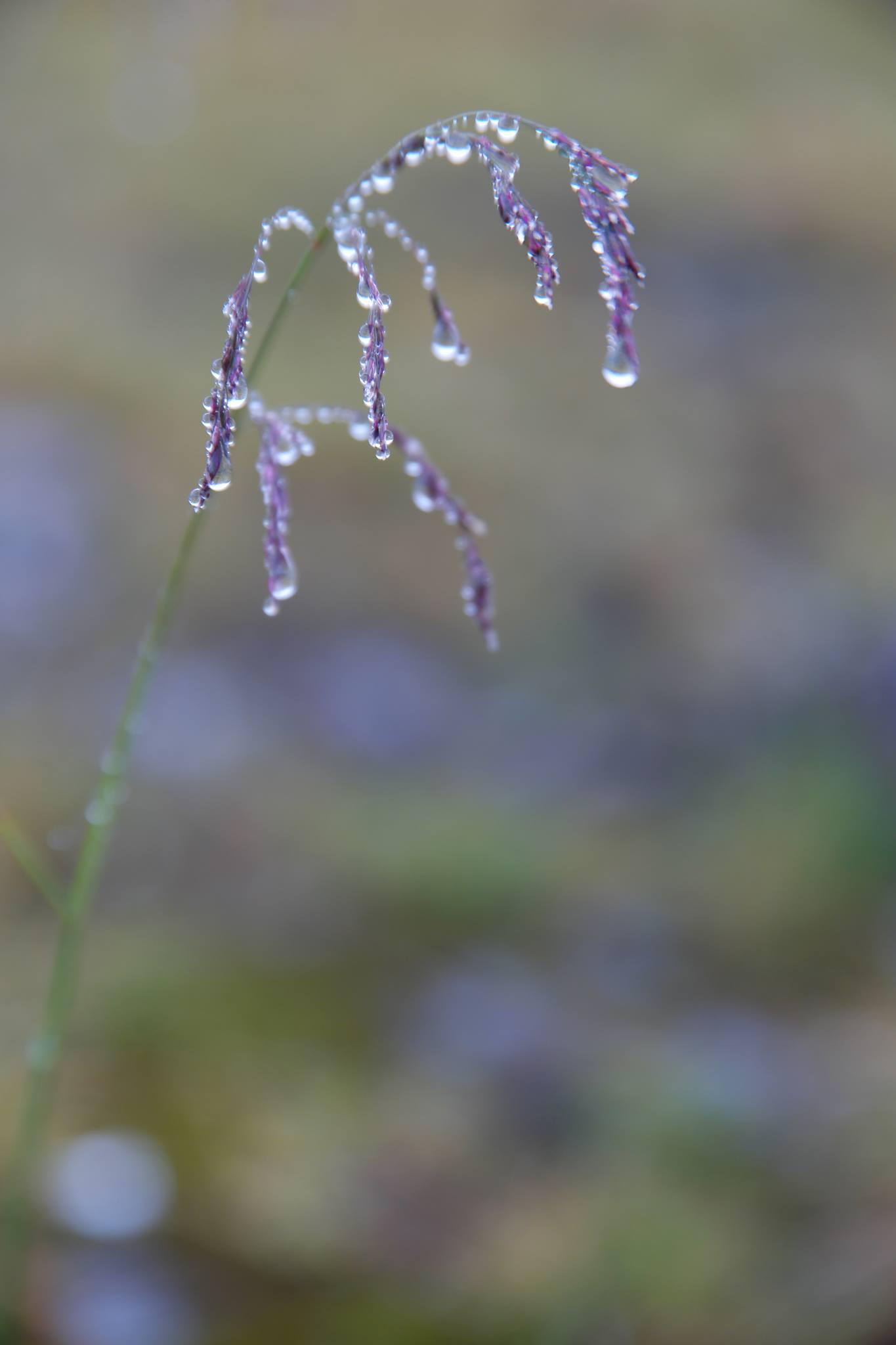 Kirsten Alana droplets
